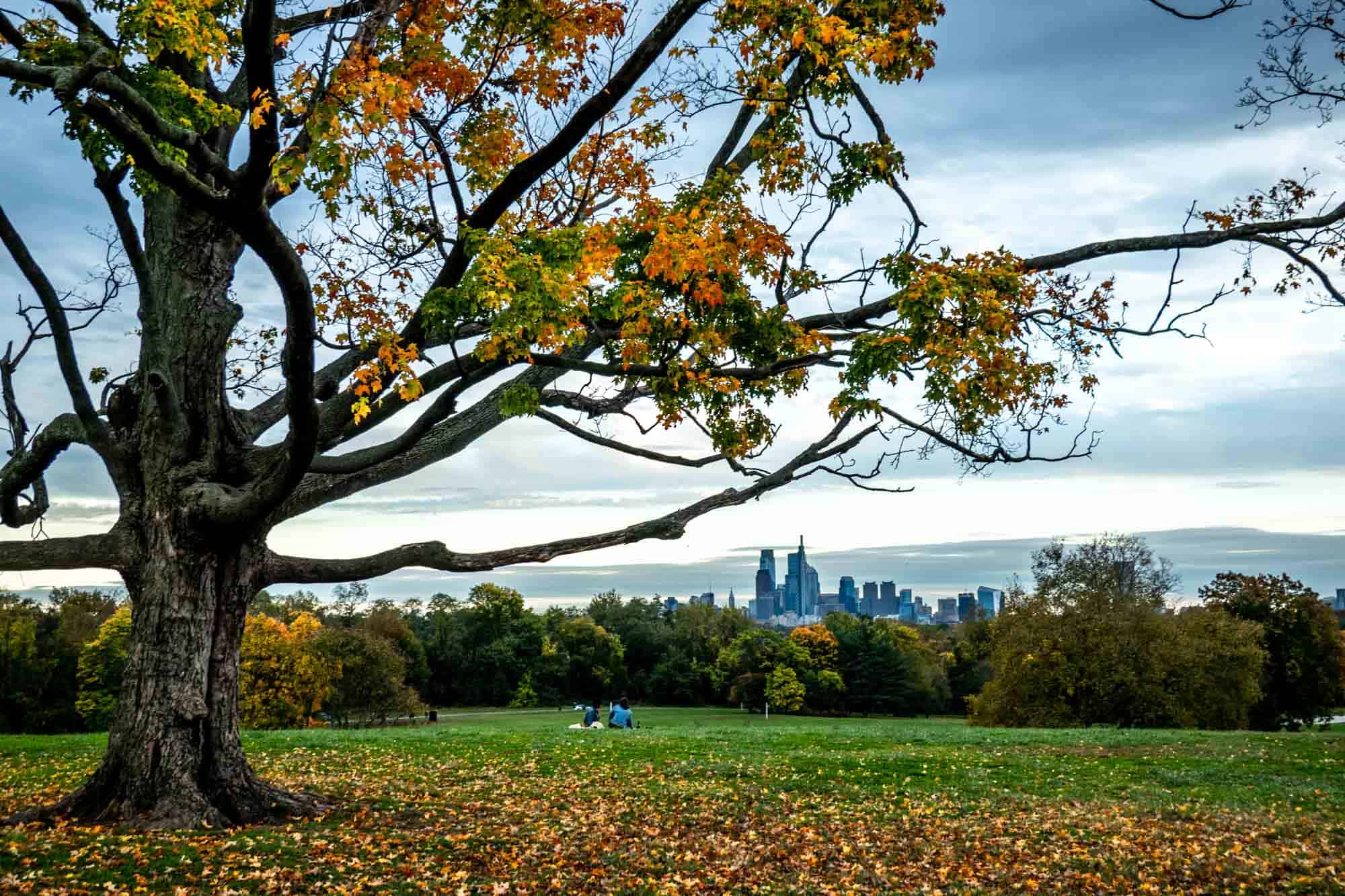 Tree with fall foliage in the foreground frames a city skyline in the distance