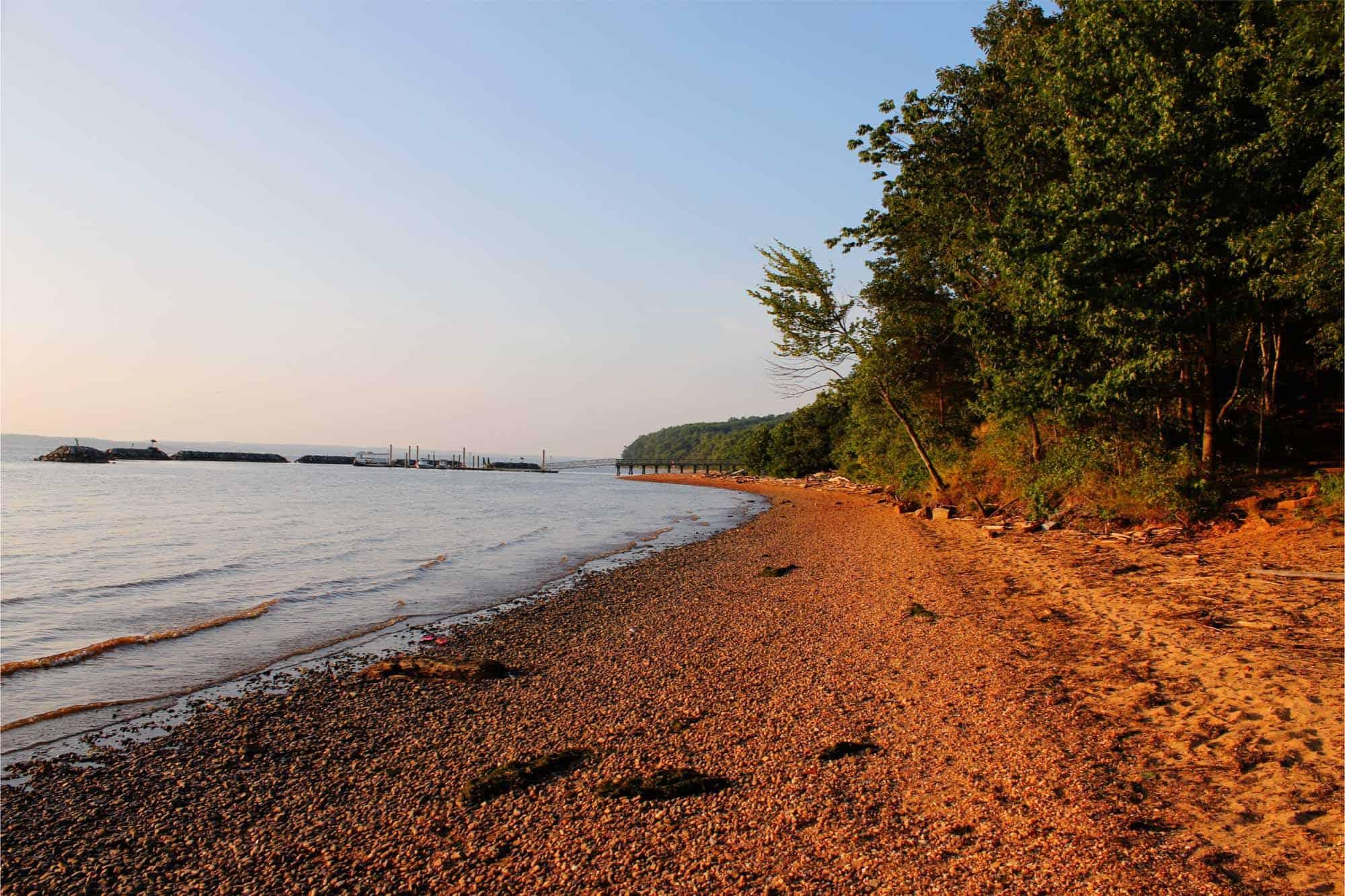 Trees along gravel beach
