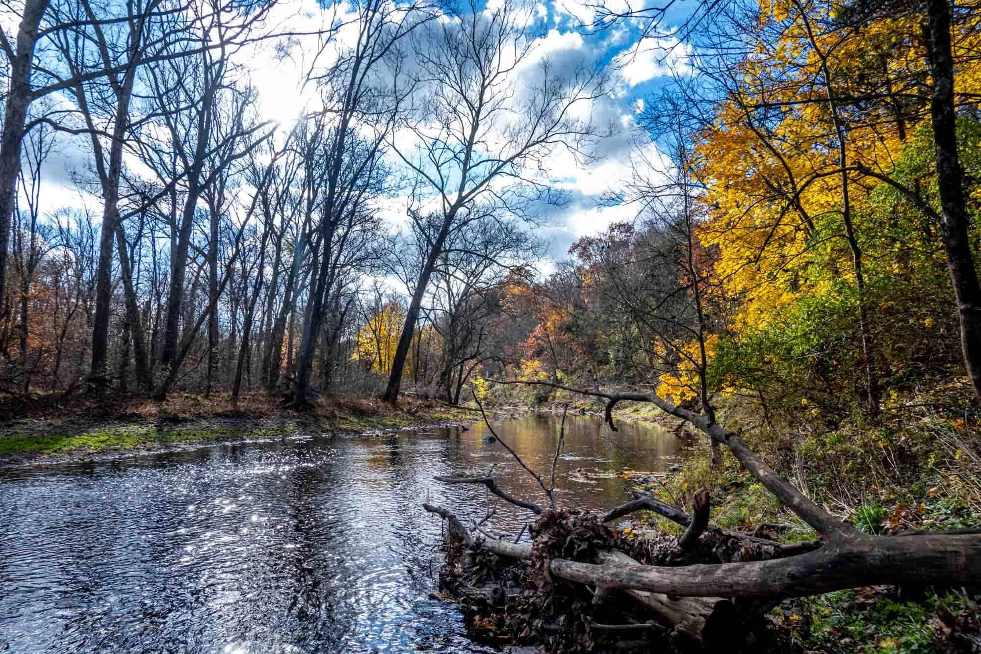 Creek flowing through state park