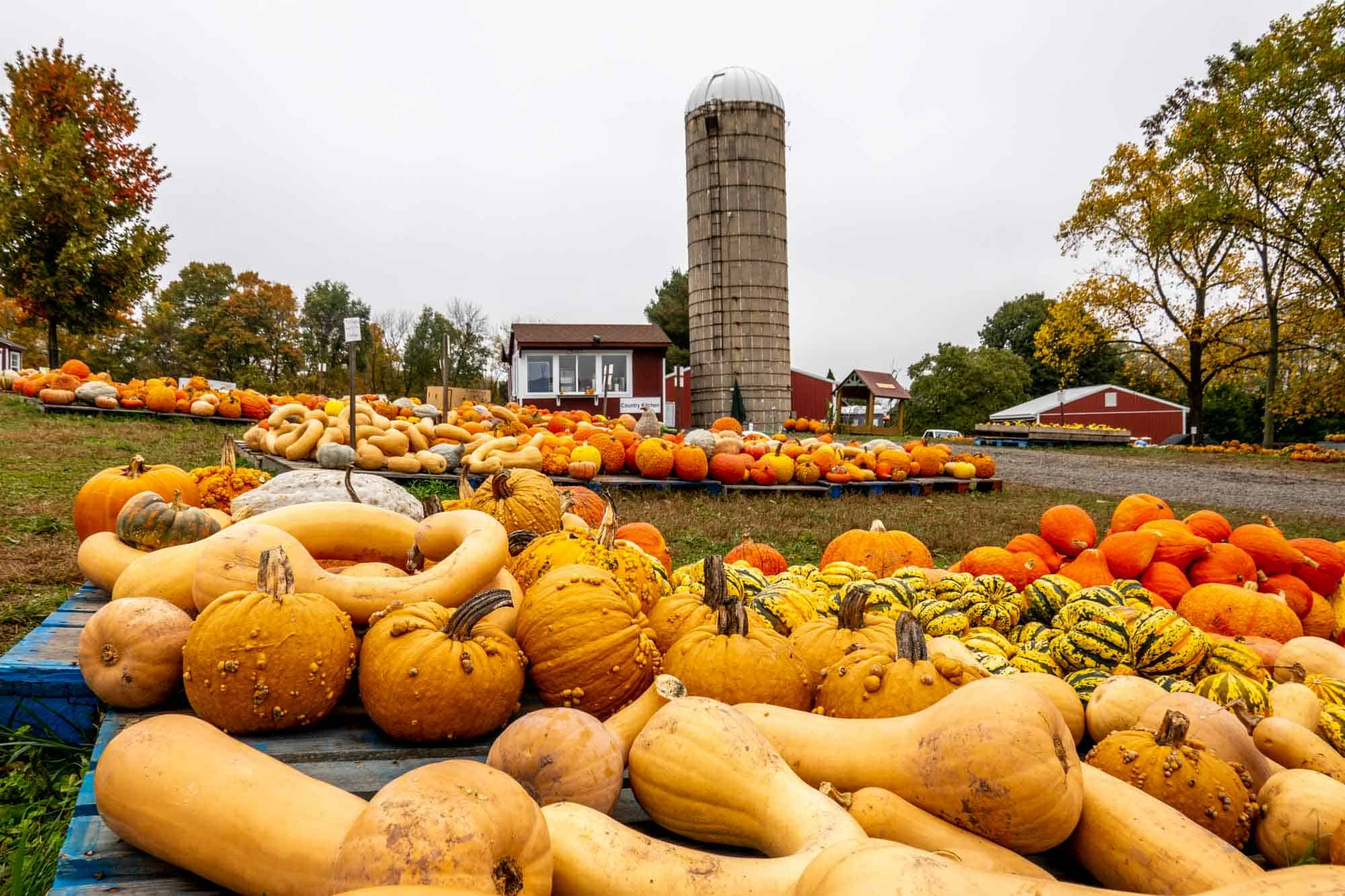 Piles of pumpkins and gourds on wooden pallets near a tall grain silo