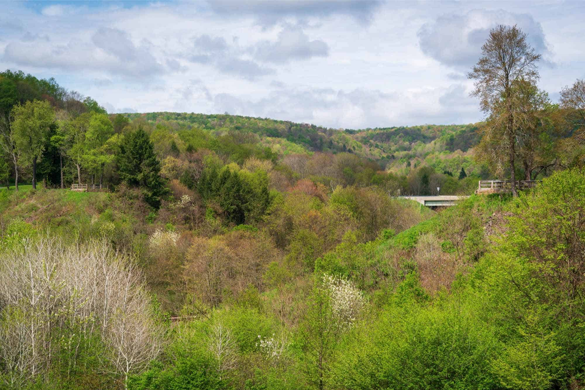 Trees in a valley with a bridge