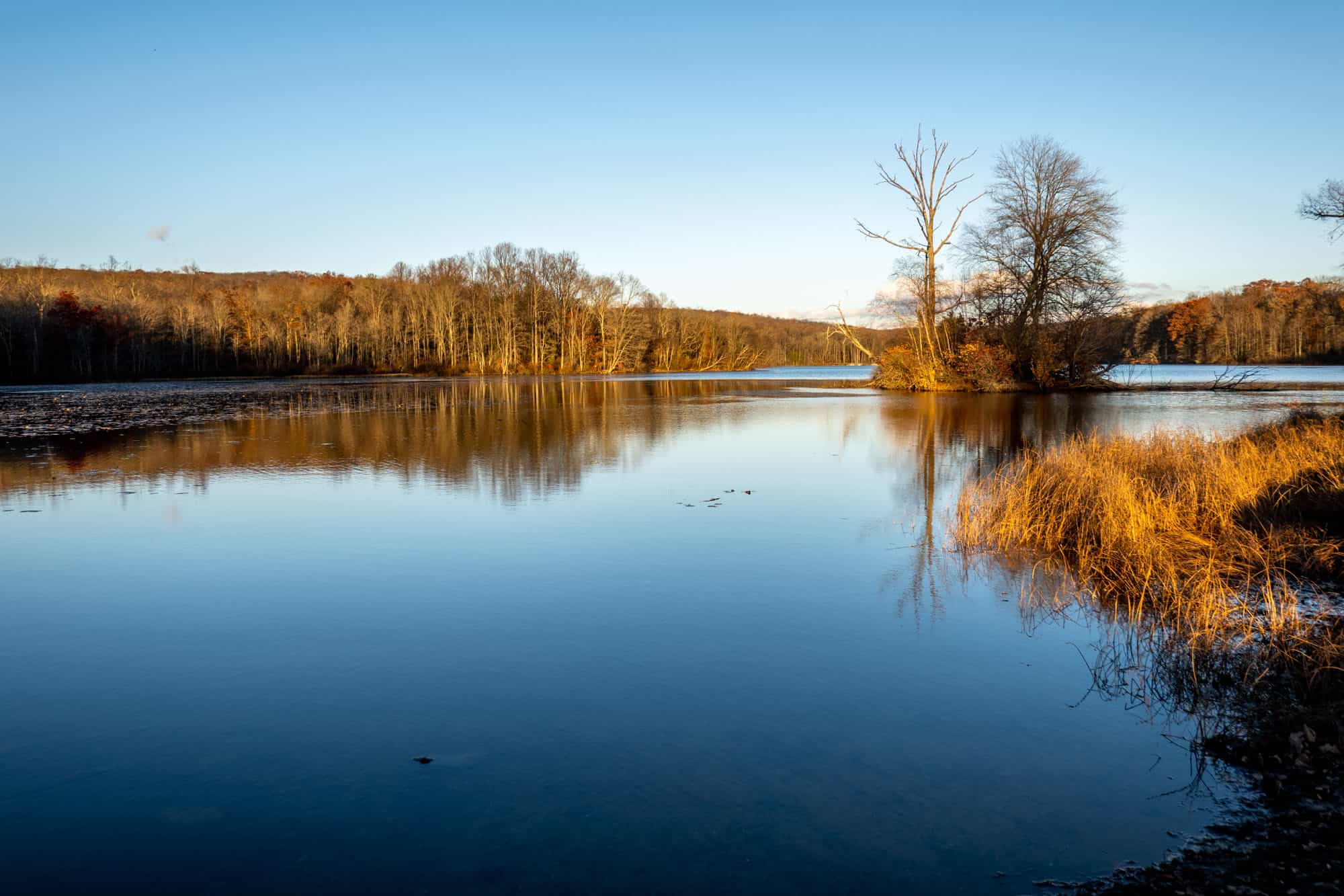 Lake in the winter with barren trees