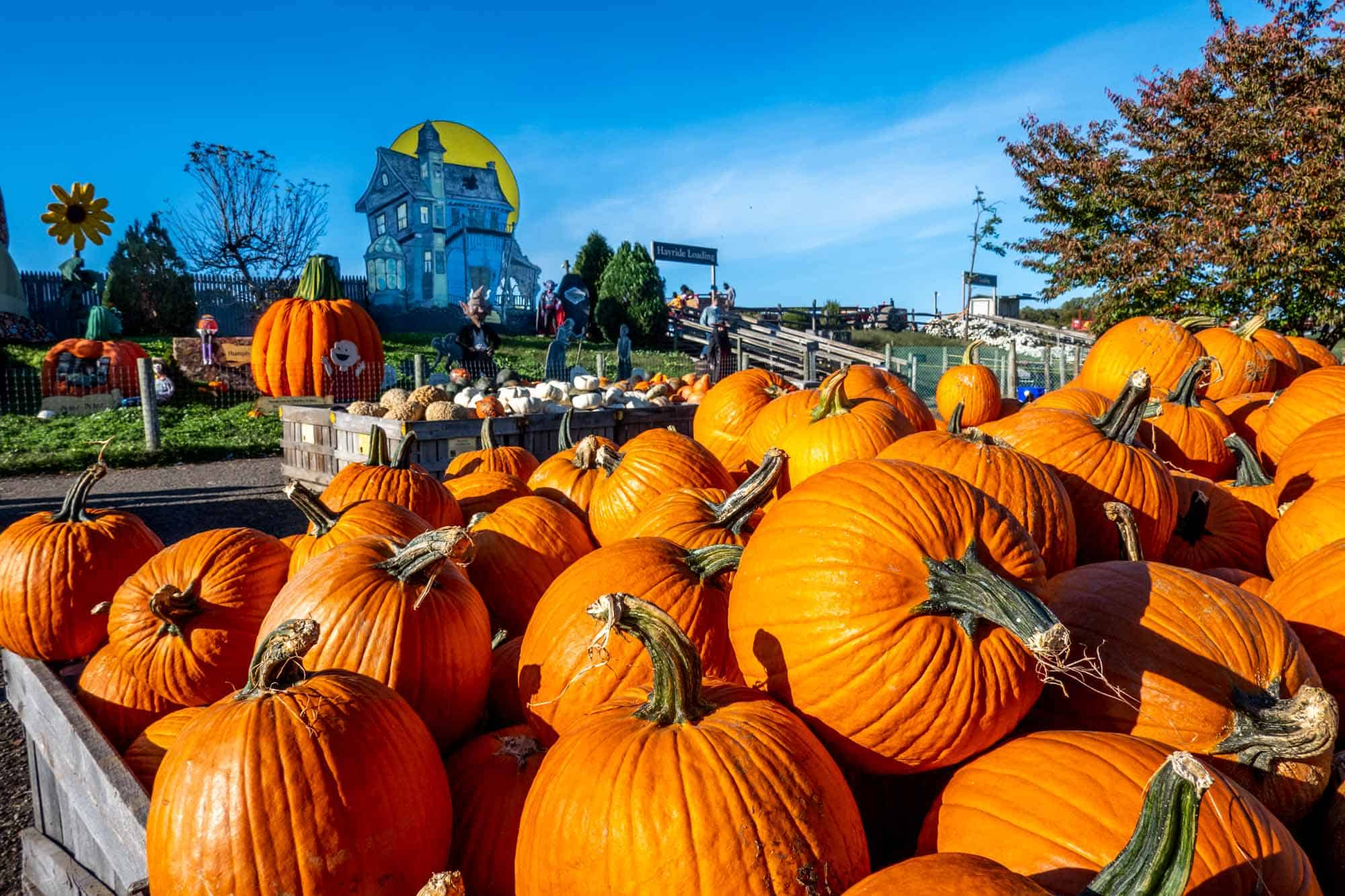 Large piles of pumpkins displayed for sale next to large inflatable pumpkin decorations and a haunted house cut-out