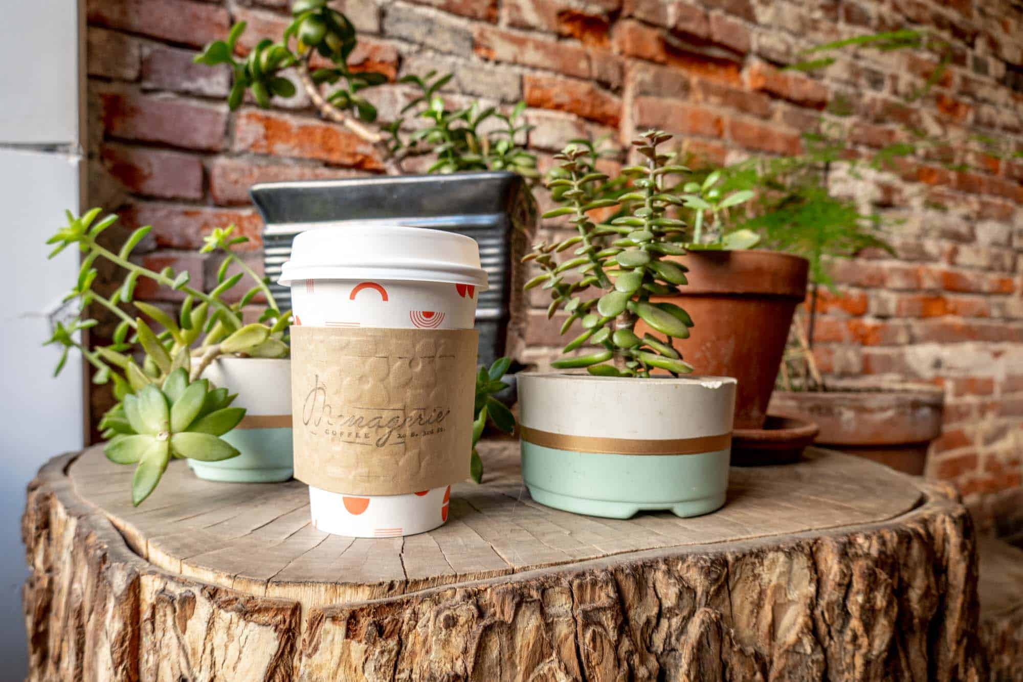 """Coffee cup with a sleeve labeled """"Menagerie Coffee"""" sitting on a tree stump beside potted plants"""