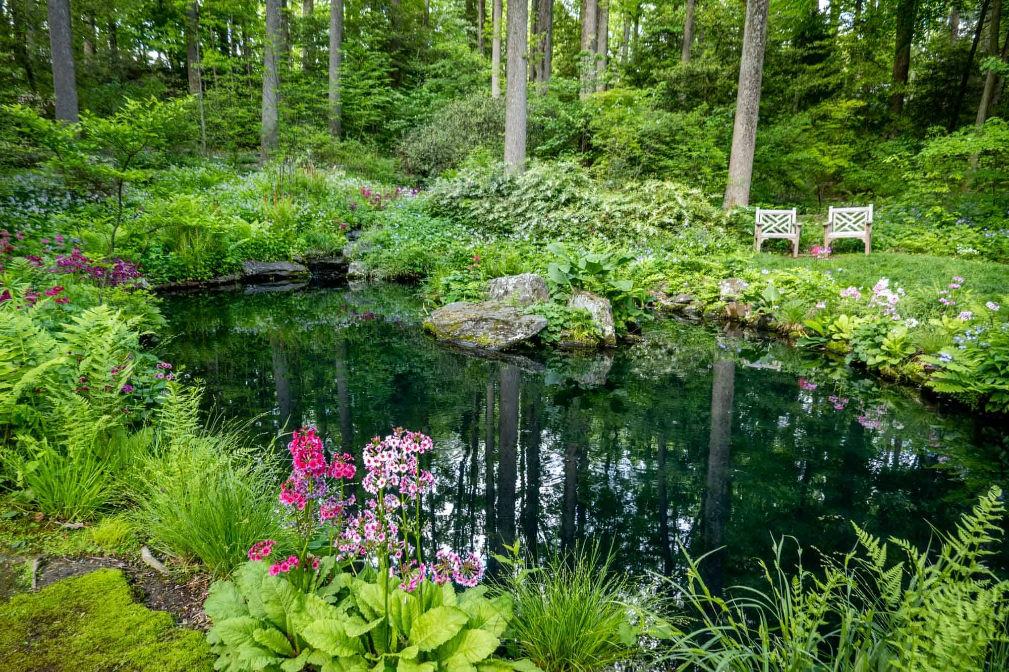 Two chairs beside a pond surrounded by green plants and flowers