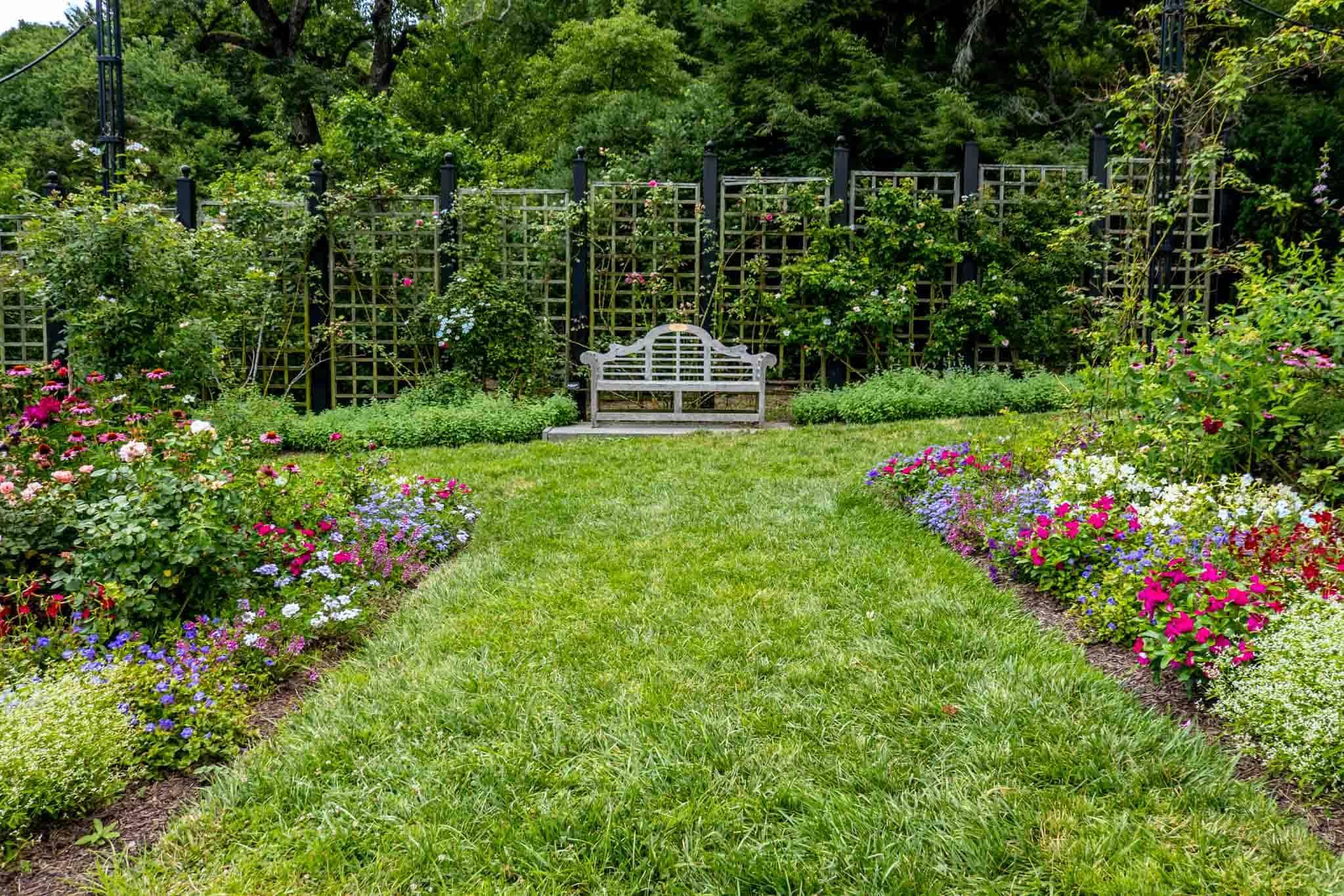 Wooden bench in a rose garden