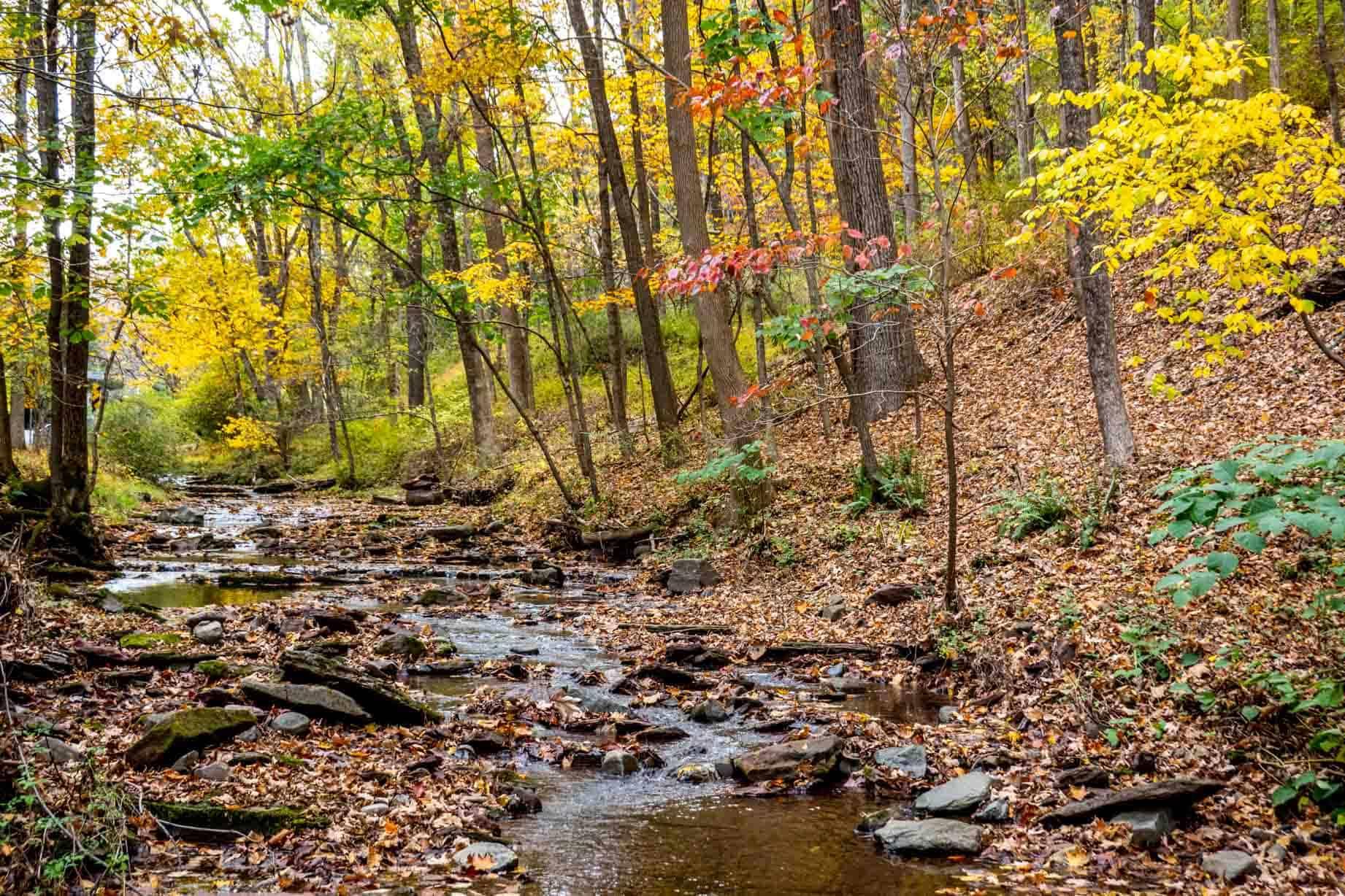Stream running through trees in autumn