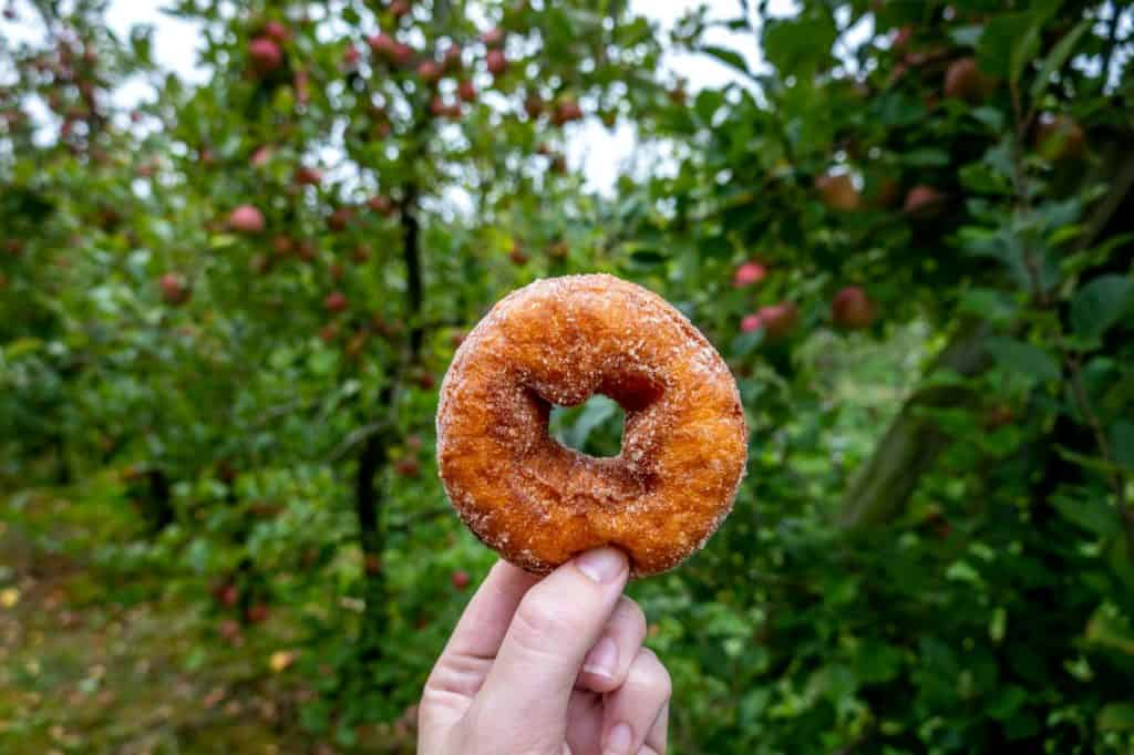 Hand holiding an apple cider donut in front of apple trees