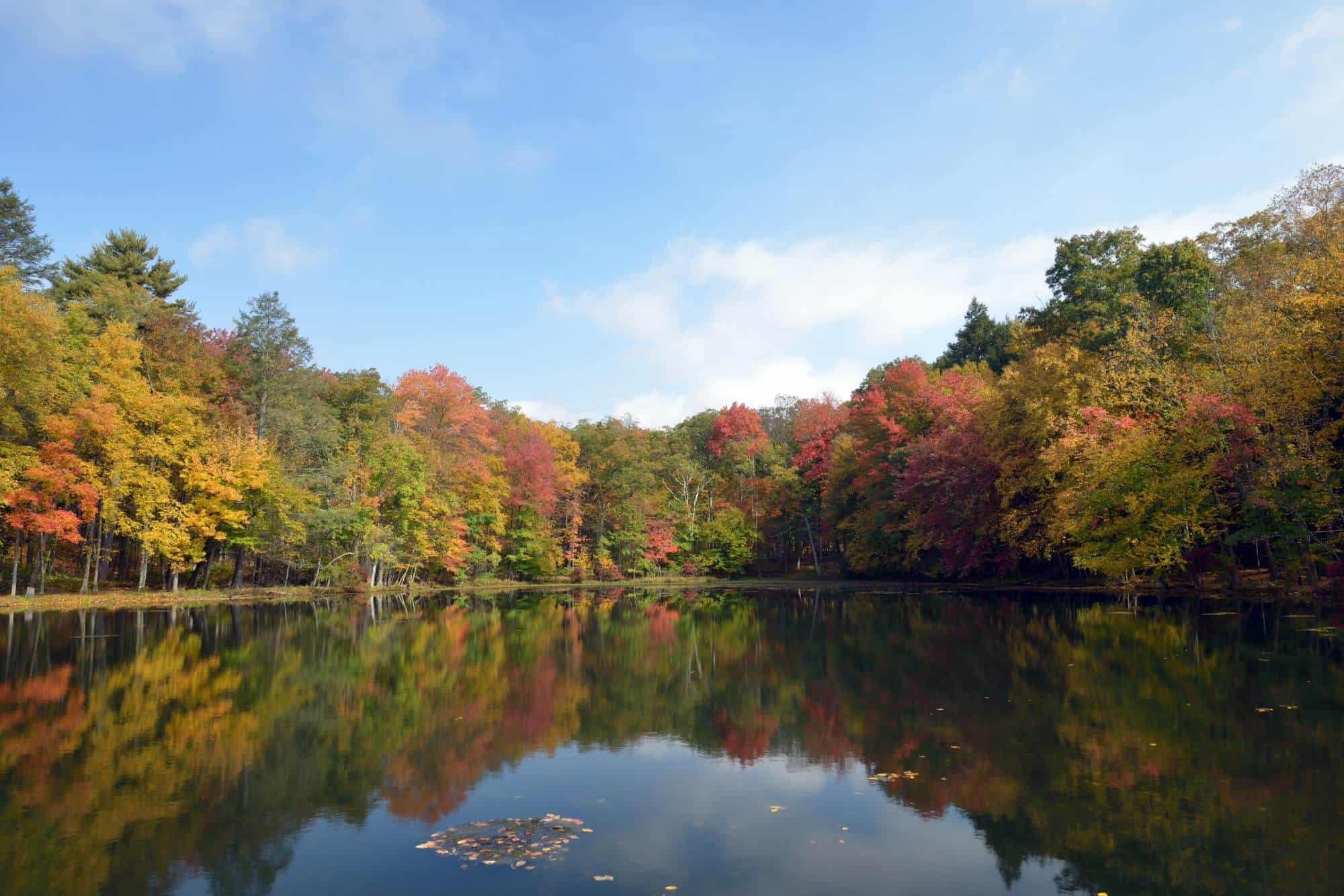 Lake with fall foliage